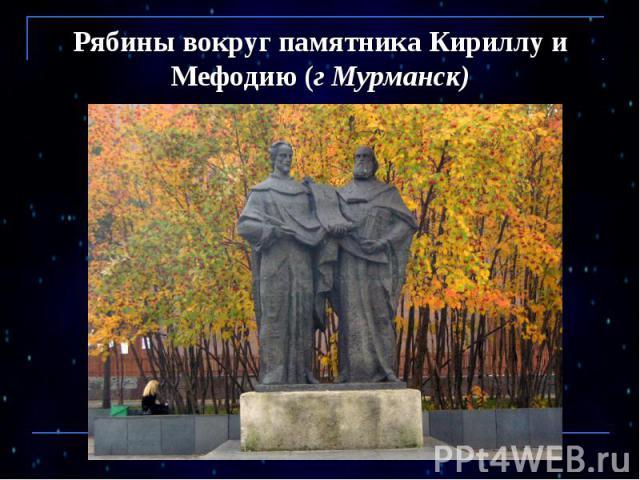 Рябины вокруг памятника Кириллу и Мефодию (г Мурманск)