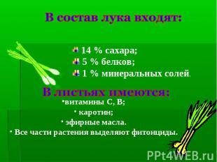 В состав лука входят: 14 % сахара; 5 % белков; 1 % минеральных солей.В листьях и