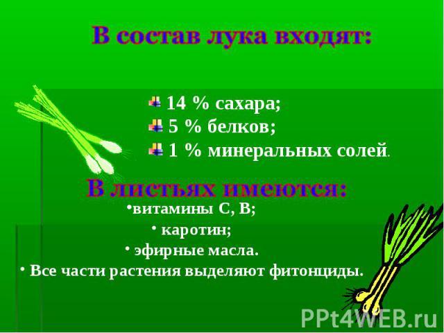 В состав лука входят: 14 % сахара; 5 % белков; 1 % минеральных солей.В листьях имеются:витамины С, В; каротин; эфирные масла. Все части растения выделяют фитонциды.