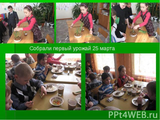 Собрали первый урожай 25 марта