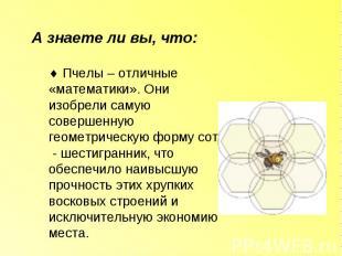 А знаете ли вы, что: Пчелы – отличные «математики». Они изобрели самую совершенн