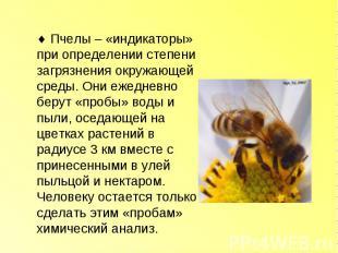 Пчелы – «индикаторы» при определении степени загрязнения окружающей среды. Они е