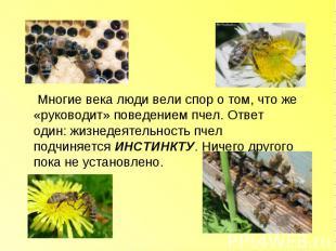 Многие века люди вели спор о том, что же «руководит» поведением пчел. Ответ один