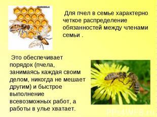 Для пчел в семье характерно четкое распределение обязанностей между членами семь