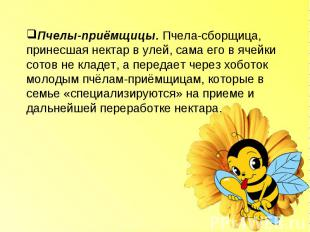 Пчелы-приёмщицы. Пчела-сборщица, принесшая нектар в улей, сама его в ячейки сото