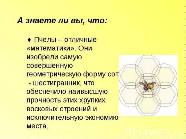 А знаете ли вы, что: Пчелы – отличные «математики». Они изобрели самую совершенную геометрическую форму сот - шестигранник, что обеспечило наивысшую прочность этих хрупких восковых строений и исключительную экономию места.