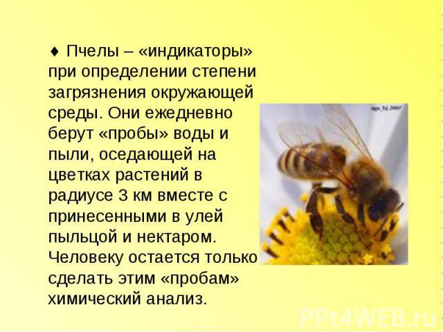 Пчелы – «индикаторы» при определении степени загрязнения окружающей среды. Они ежедневно берут «пробы» воды и пыли, оседающей на цветках растений в радиусе 3 км вместе с принесенными в улей пыльцой и нектаром. Человеку остается только сделать этим «…