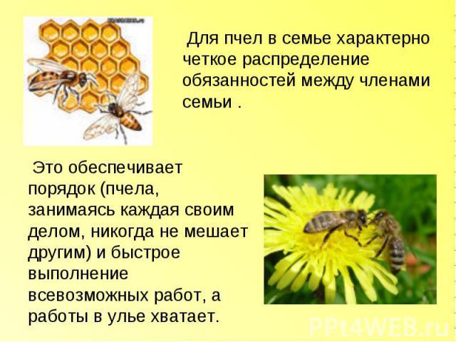 Для пчел в семье характерно четкое распределение обязанностей между членами семьи . Это обеспечивает порядок (пчела, занимаясь каждая своим делом, никогда не мешает другим) и быстрое выполнение всевозможных работ, а работы в улье хватает.