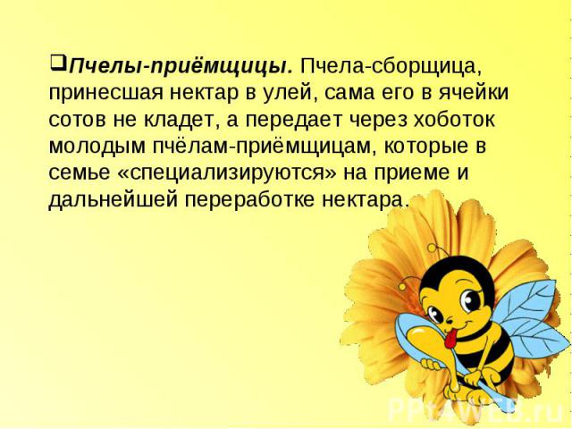 Пчелы-приёмщицы. Пчела-сборщица, принесшая нектар в улей, сама его в ячейки сотов не кладет, а передает через хоботок молодым пчёлам-приёмщицам, которые в семье «специализируются» на приеме и дальнейшей переработке нектара.