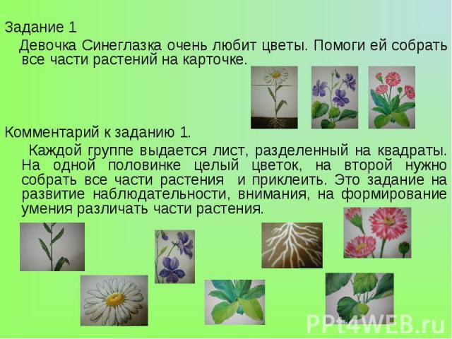Задание 1 Девочка Синеглазка очень любит цветы. Помоги ей собрать все части растений на карточке. Комментарий к заданию 1. Каждой группе выдается лист, разделенный на квадраты. На одной половинке целый цветок, на второй нужно собрать все части расте…