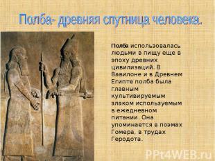 Полба- древняя спутница человека. Полбаиспользовалась людьми в пищу еще в эпоху