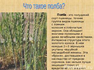 Что такое полба? Полба- это полудикий сорт пшеницы, точнее группа видов пшеницы