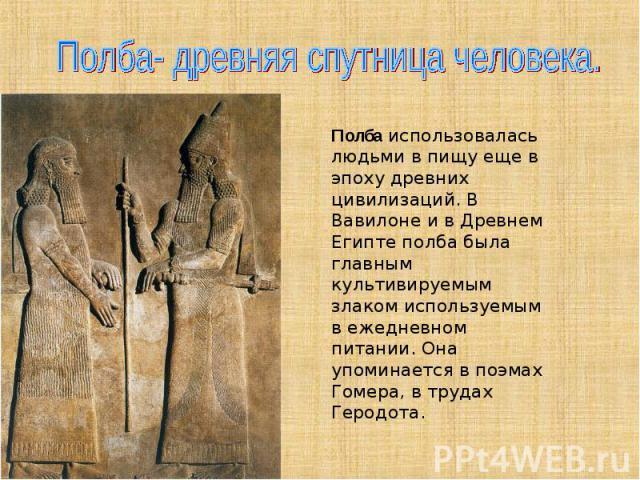 Полба- древняя спутница человека. Полбаиспользовалась людьми в пищу еще в эпоху древних цивилизаций. В Вавилоне и в Древнем Египтеполба была главным культивируемым злаком используемым в ежедневном питании. Она упоминается в поэмах Гомера, в трудах…