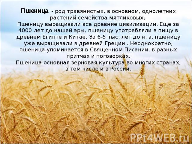 Пшеница - род травянистых, в основном, однолетних растений семейства мятликовых, Пшеницу выращивали все древние цивилизации. Еще за 4000 лет до нашей эры, пшеницу употребляли в пищу в древнем Египте и Китае. За 6-5 тыс. лет до н. э. пшеницу уже выр…