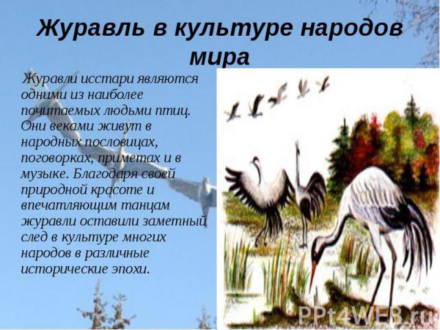 Журавль в культуре народов мира Журавли исстари являются одними из наиболее почитаемых людьми птиц. Они веками живут в народных пословицах, поговорках, приметах и в музыке. Благодаря своей природной красоте и впечатляющим танцам журавли оставили зам…
