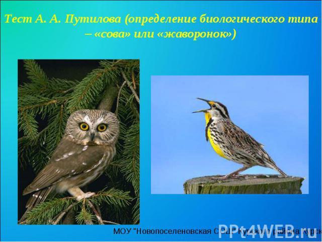 Тест А. А. Путилова (определение биологического типа – «сова» или «жаворонок»)