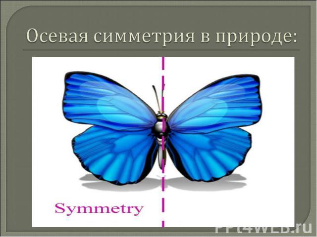 Осевая симметрия в природе: