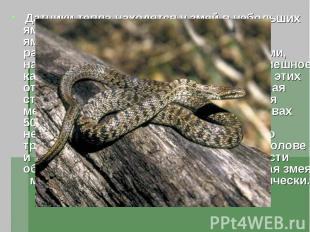 Датчики тепла находятся у змей в небольших ямках на морде , откуда и их название