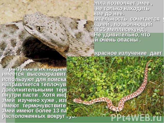 Стереоскопическое восприятие тепла позволяет змее , улавливая инфракрасные волны, не только находить добычу , но и оценивать расстояние до неё. Фантастическая тепловая чувствительность сочетается у ямкоголовых змей с быстрой реакцией , позволяющий з…