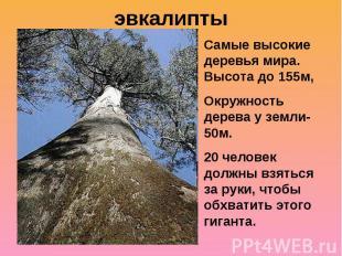 эвкалиптыСамые высокие деревья мира. Высота до 155м,Окружность дерева у земли-50
