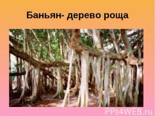 Баньян- дерево роща