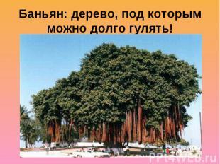 Баньян: дерево, под которым можно долго гулять!