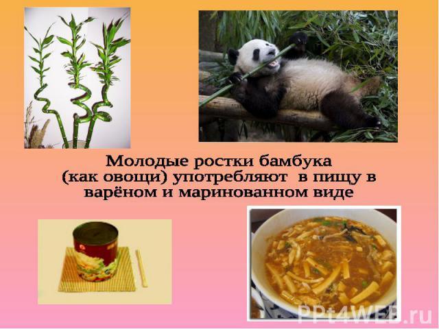 Молодые ростки бамбука(как овощи) употребляют в пищу в варёном и маринованном виде