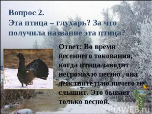 Вопрос 2.Эта птица – глухарь? За что получила название эта птица?Ответ: Во время