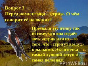 Вопрос 3Перед вами птица – стриж. О чём говорит её название?Прозвали эту птицу т