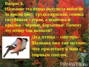Вопрос 6.Название эта птица получила вовсе не за яркий цвет: грудка красная, спи