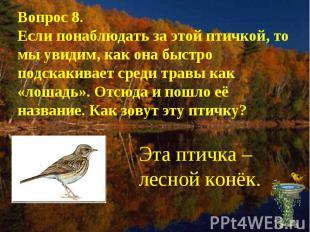 Вопрос 8.Если понаблюдать за этой птичкой, то мы увидим, как она быстро подскаки