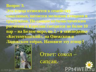 Вопрос 3.Эта птица относится к семейству соколиных, питается мелкими птицами и г