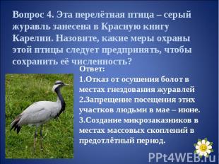 Вопрос 4. Эта перелётная птица – серый журавль занесена в Красную книгу Карелии.