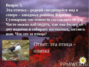 Вопрос 5.Эта птичка – редкий гнездящийся вид в северо – западных районах Карелии