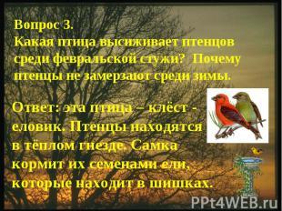 Вопрос 3.Какая птица высиживает птенцов среди февральской стужи? Почему птенцы н