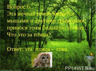 Вопрос 6.Эта ночная птица питается мышами и другими грызунами, принося этим боль