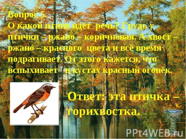 Вопрос 5.О какой птице идёт речь? Грудь у птички – ржано – коричневая. А хвост – ржано – красного цвета и всё время подрагивает. От этого кажется, что вспыхивает в кустах красный огонёк.Ответ: эта птичка – горихвостка.