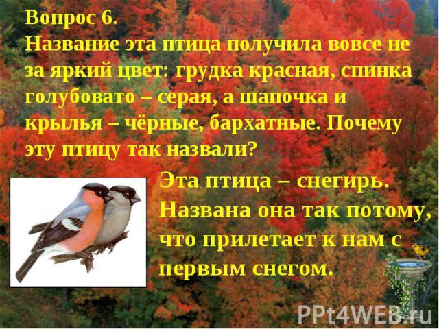 Вопрос 6.Название эта птица получила вовсе не за яркий цвет: грудка красная, спинка голубовато – серая, а шапочка и крылья – чёрные, бархатные. Почему эту птицу так назвали?Эта птица – снегирь. Названа она так потому, что прилетает к нам с первым снегом.