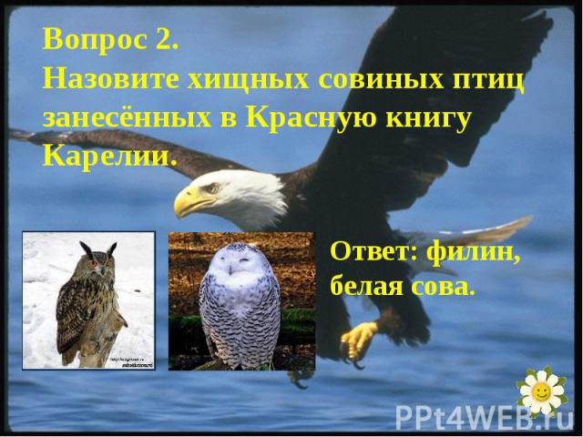 Вопрос 2.Назовите хищных совиных птиц занесённых в Красную книгу Карелии.Ответ: филин, белая сова.
