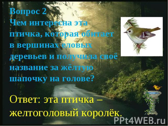 Вопрос 2Чем интересна эта птичка, которая обитает в вершинах еловых деревьев и получила своё название за жёлтую шапочку на голове?Ответ: эта птичка – желтоголовый королёк.
