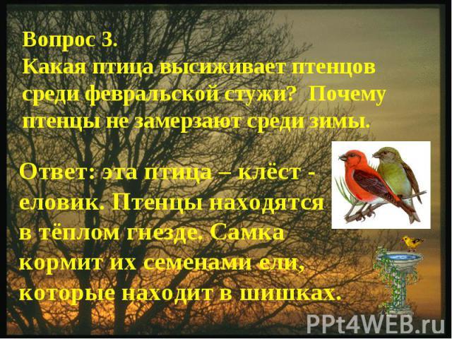 Вопрос 3.Какая птица высиживает птенцов среди февральской стужи? Почему птенцы не замерзают среди зимы.Ответ: эта птица – клёст - еловик. Птенцы находятся в тёплом гнезде. Самка кормит их семенами ели, которые находит в шишках.