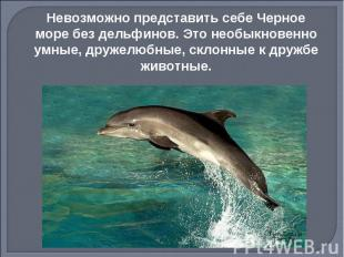 Невозможно представить себе Черное море без дельфинов. Это необыкновенно умные,