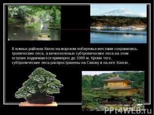 В южных районах Кюсю на морском побережье местами сохранились тропические леса,