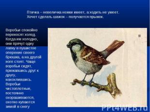 Птичка – невеличка ножки имеет, а ходить не умеет.Хочет сделать шажок – получает