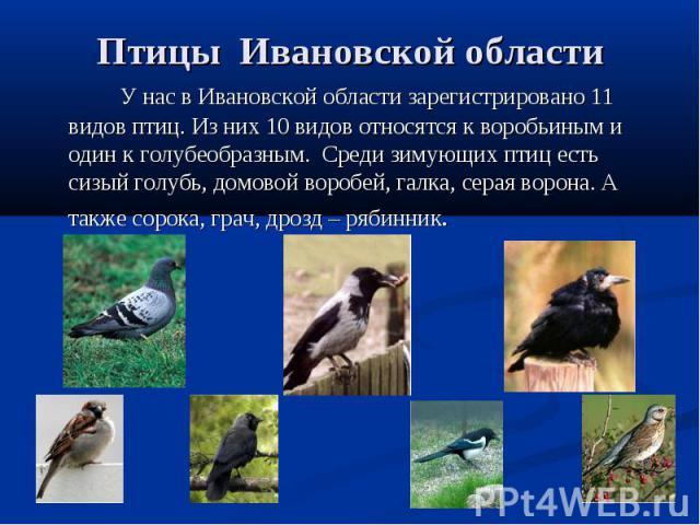 Птицы Ивановской области У нас в Ивановской области зарегистрировано 11 видов птиц. Из них 10 видов относятся к воробьиным и один к голубеобразным. Среди зимующих птиц есть сизый голубь, домовой воробей, галка, серая ворона. А также сорока, грач, др…