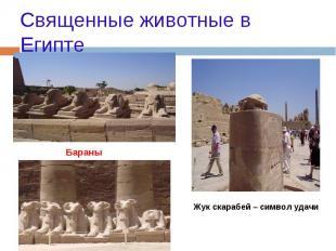 Священные животные в Египте Бараны Жук скарабей – символ удачи