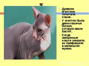 Древние египтяне почитали кошек. У египтян была даже кошачья богиня, которую зва