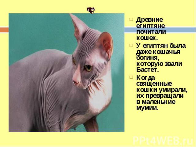 Древние египтяне почитали кошек. У египтян была даже кошачья богиня, которую звали Бастет. Когда священные кошки умирали, их превращали в маленькие мумии.