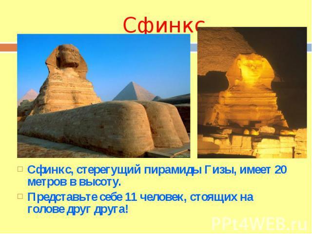 СфинксСфинкс, стерегущий пирамиды Гизы, имеет 20 метров в высоту. Представьте себе 11 человек, стоящих на голове друг друга!