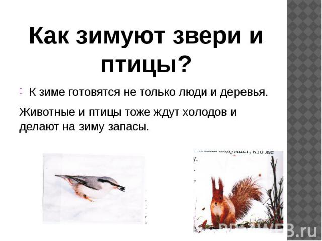 К зиме готовятся не только люди и деревья.К зиме готовятся не только люди и деревья.Животные и птицы тоже ждут холодов и делают на зиму запасы.